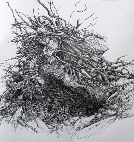 Uprooted Tree, North Wales pen drawing 84 x 90 cm
