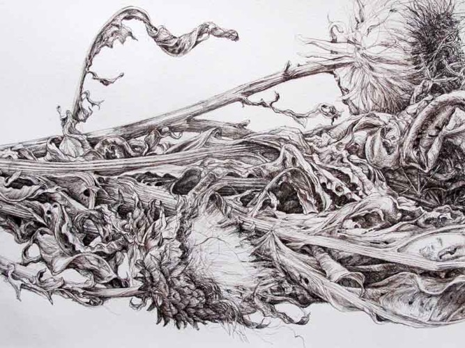 Detail of a Larger Image, Dried Cardoon Leaves pen and ink drawing 132 x 62 cm