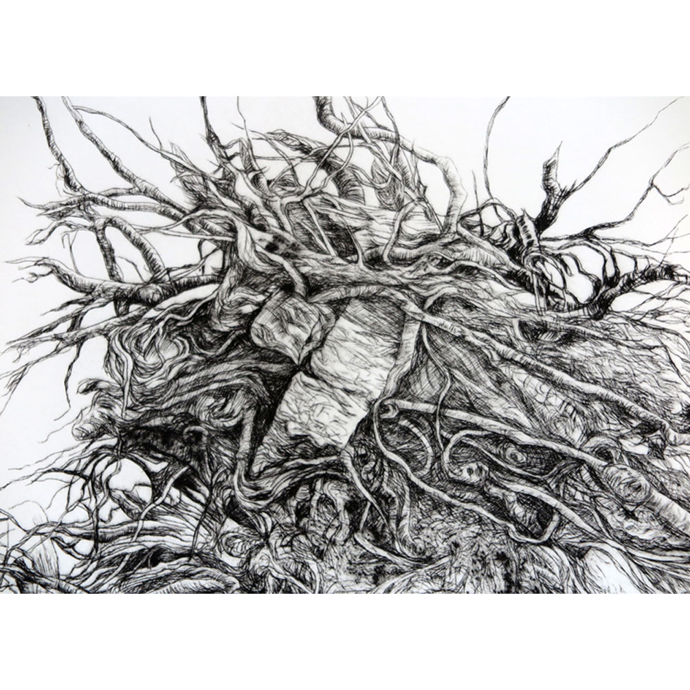 detail-uprooted-tree-root