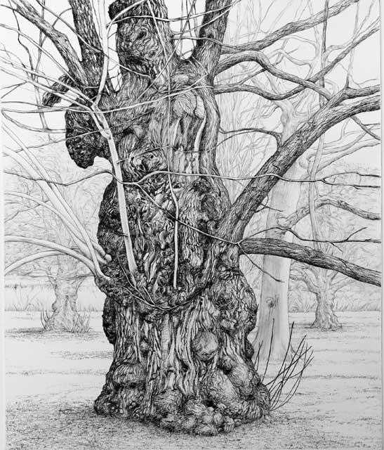old-chestnut-tree-kew-gardens