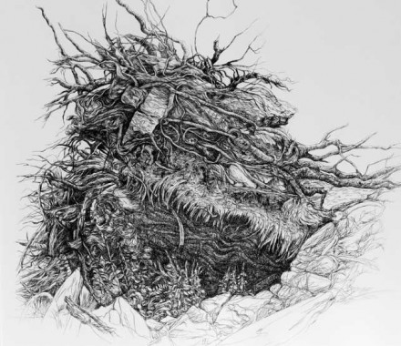 Uprooted Tree Root